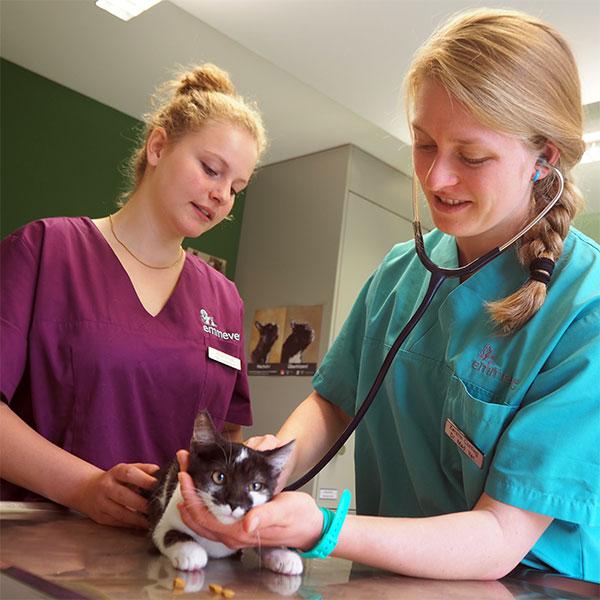 Dienstleistungen Kleintiere Tierarztpraxis Emmevet AG